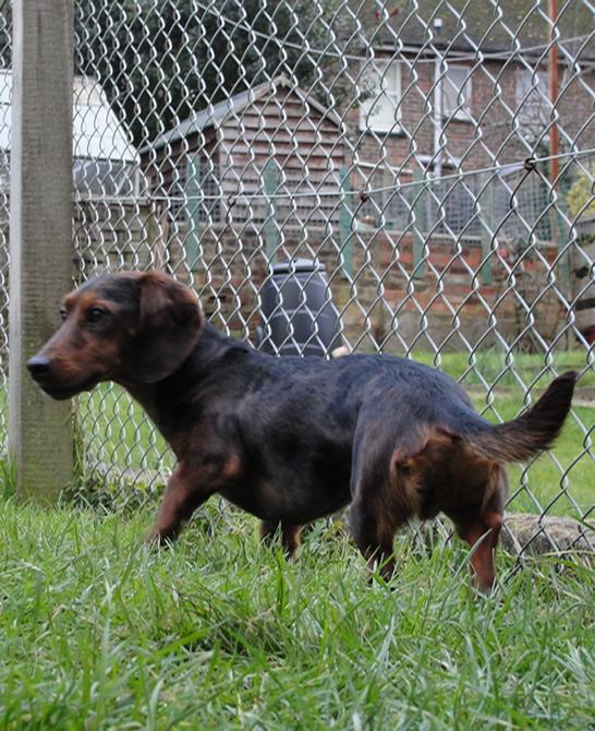 Image Result For Dog Training Classes Tunbridge Wells