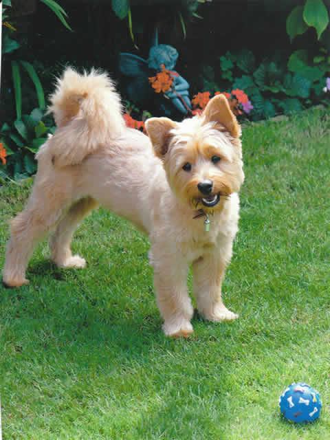 Dog Training Classes Kent