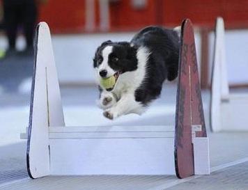 Dog Agility Training Medway