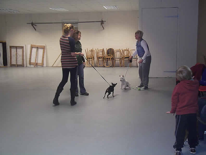 Dog Training Maidstone