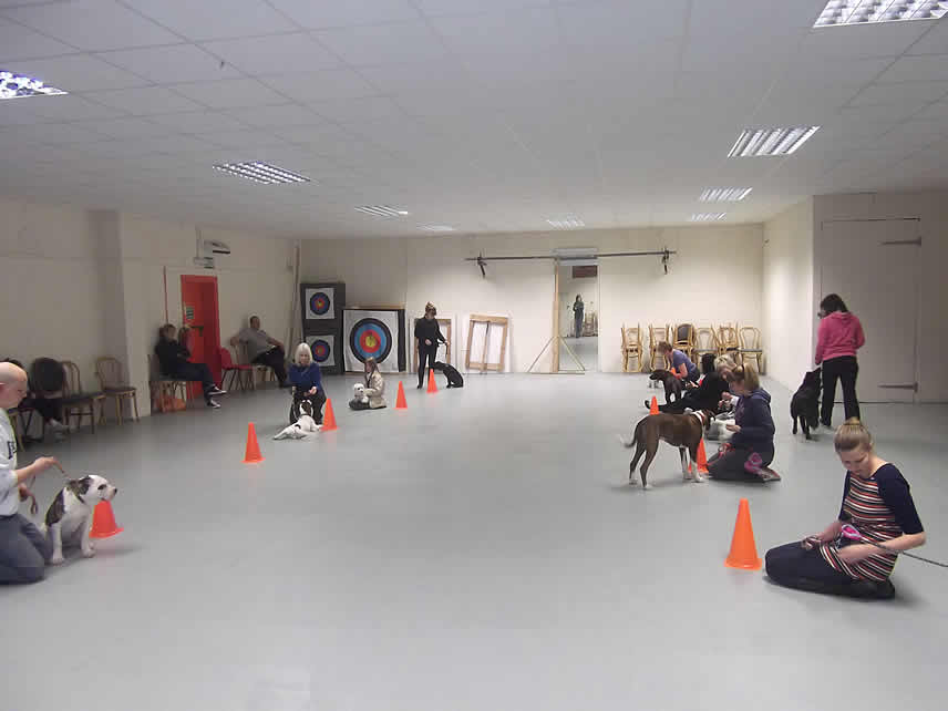 Dog Training Direction And Control