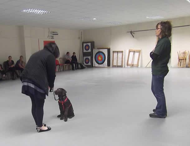 Dog Training Maidstone