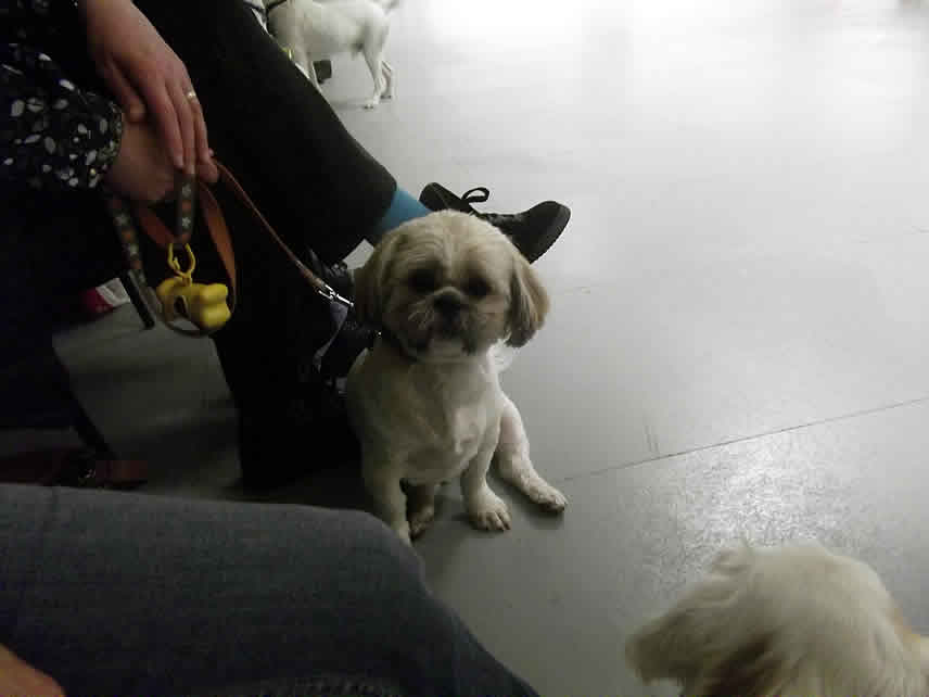 Faversham Dog Training