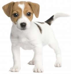puppy training puppy trainer dog training kent Maidstone Canterbury Sevenoaks Thanet Ashford