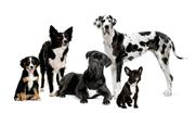 dog-training-puppy-training-kent-Medway_Towns_Newington_rainham-gillingham-chatham-rochester-strood-dog-trainer-all-problems-addressed